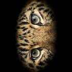 Eyes of the Amur - iPhone Case by Mark Hughes