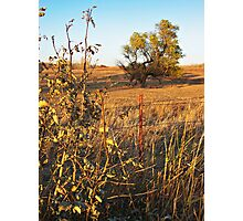 Out Standing in the Field Photographic Print