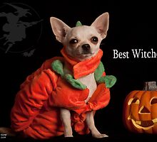 Best Witches by Nir Avner