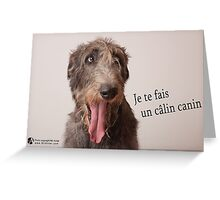 Calin canin Greeting Card