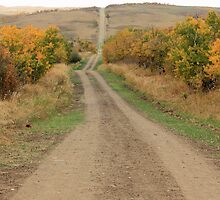 Country Road to Nowhere by Jim Sauchyn