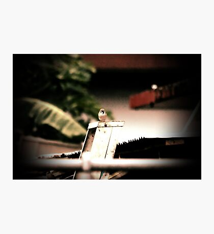 The bird on the ladder Photographic Print