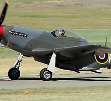 Mustang by Malcolm  Taylor