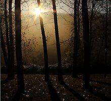 Autumn Shadows by Tracy Friesen