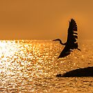Silhouette Fly Bird by arthit somsakul