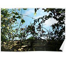 September Sun: Through Leaves Poster