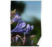 September Sun: Purple Flowers Poster