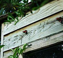 September Sun: Two Butterflies by Áine Warren