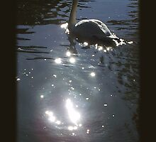 Black Swan by ColoringTheWind