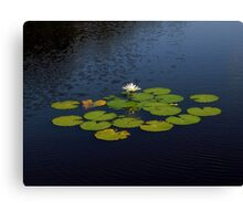 Pond Treasures ~ Part Two Canvas Print