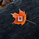 1 Love by Kelly Pierce