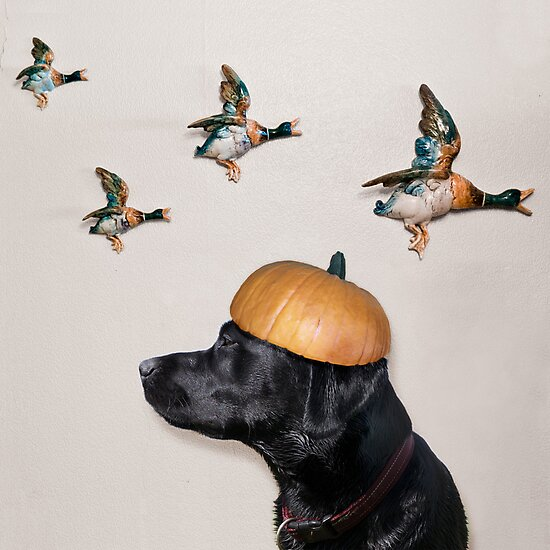 Halloween Dog with Flying Ducks by Heather Buckley
