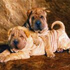 Sharpei Dogs in Impasto by Shawna Mac