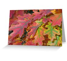 Beautiful autumn leaves Greeting Card