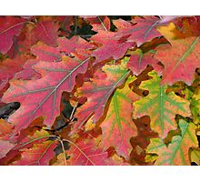 Beautiful autumn leaves Photographic Print