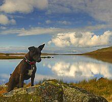 Tarn At Devoke Water by Jamie  Green