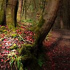 A THOUSAND AUTUMN LEAVES  by leonie7