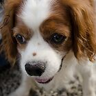 Cute Doggie by Johnathan Bellamy