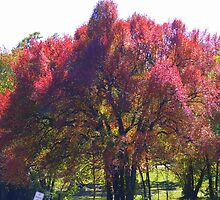 Fringes of Autumn Red by Ruth Lambert