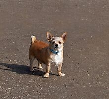 Small Dog with Attitude by Sue Robinson