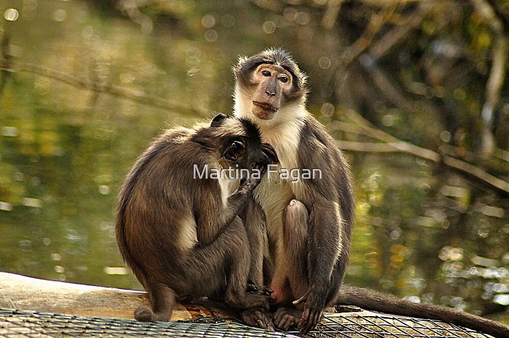 Two Monkeys by Martina Fagan
