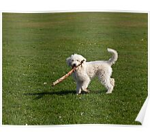 Dog Playing with Stick Poster