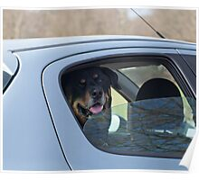 Dog in Car Poster