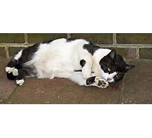 Cat Lying Down Photographic Print
