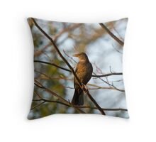Blackbird in Evening Sunlight Throw Pillow