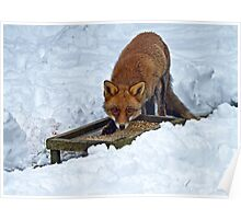 Fox in Snow Poster