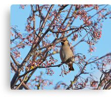 Waxwing and Rowanberries Canvas Print