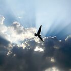 Seagull by K. Abraham