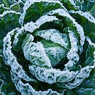 Frost on Brussels Sprouts by Sue Robinson