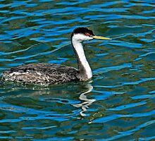 Afternoon Swim by George I. Davidson