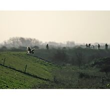 Barn Owl Hunting Photographic Print