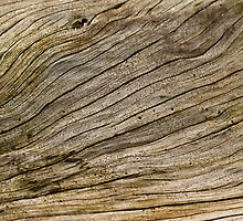 Wood Grain by Sue Robinson