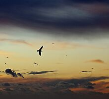 Gulls at Sunset by Sue Robinson