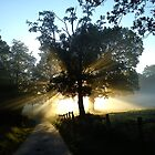 Dawn Light and Trees by Sue Robinson