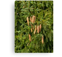 Christmas Tree Fir Cones  Canvas Print