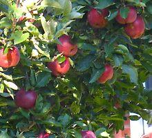 Apple pie? Toffee apples? Apple crisp?  by MarianBendeth