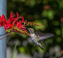 Hummer Lunch by copperblue