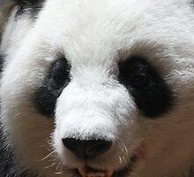 Panda by quirinusriddle