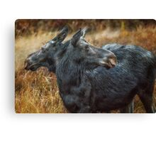 The Moose has Two Faces Canvas Print