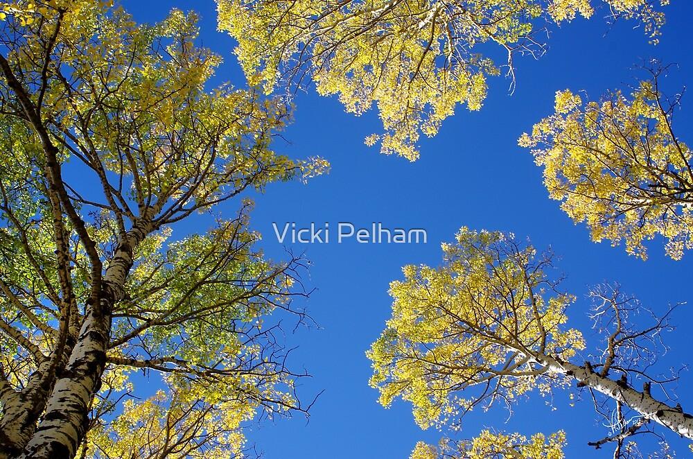 Canopy by Vicki Pelham