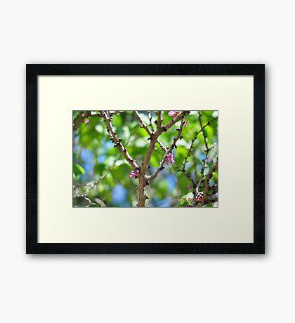 Georgia Blossoms Framed Print