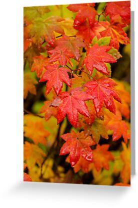 Vine Maple, Trail to Proxy Falls, Oregon by Jim Stiles