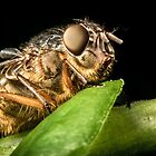 Fly On A Leaf #5 by Kerrod Sulter