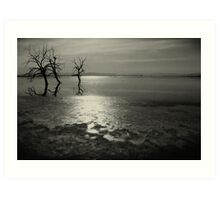 Salton Sea Trees Art Print