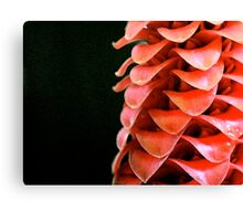 Red Wax Ginger Canvas Print