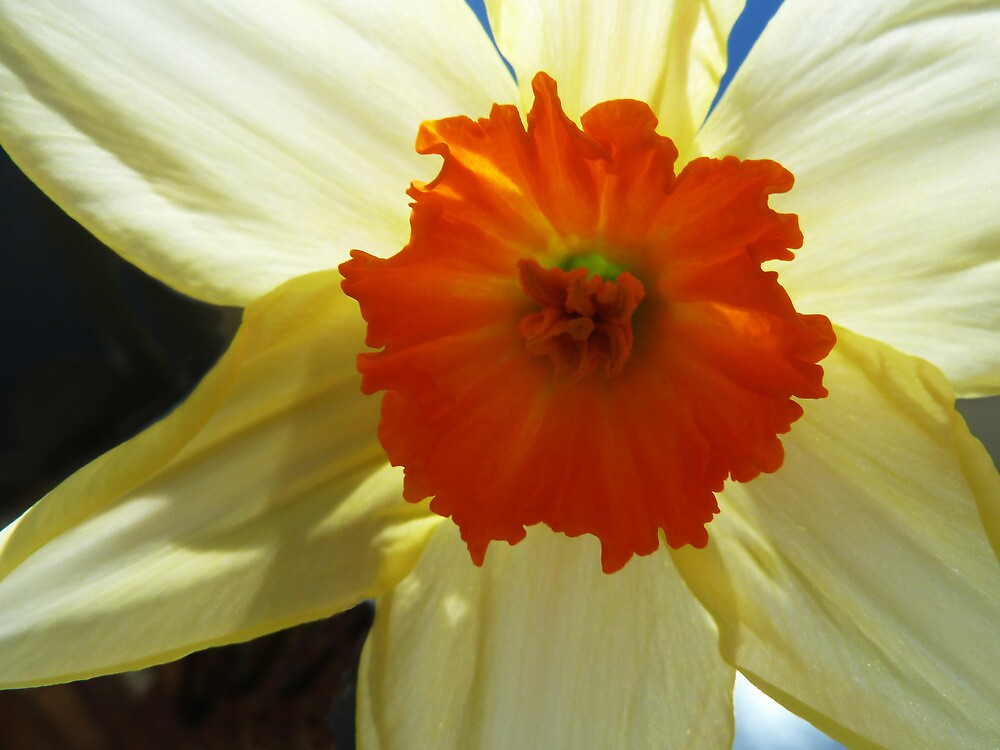 Spring Shines Brightly by PictureNZ